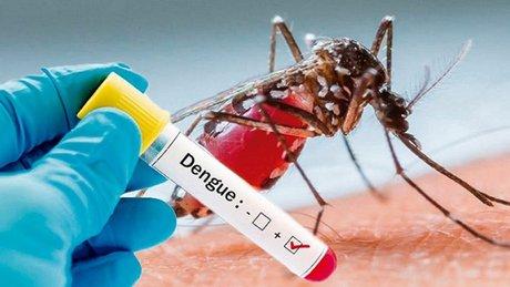 Dengue-v4__FillWzg0MCw1NTBd.jpg