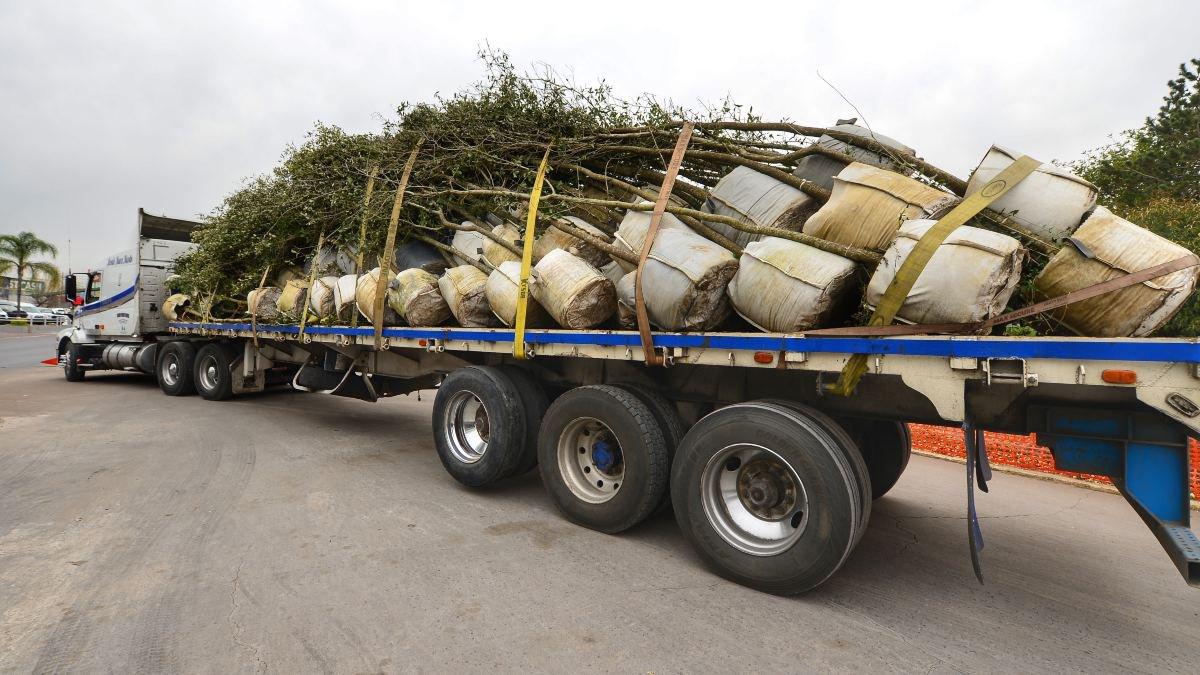 Llegan árboles que darán vida a Paso Superior Francisco Villa.jpg