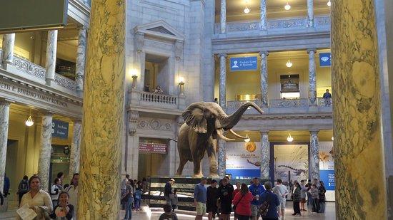 Museo Nacional Smithsoniano.jpg