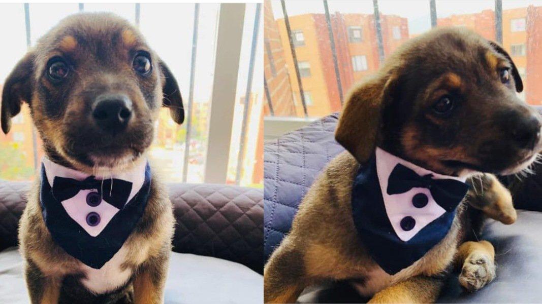 Se vuelve viral perrito plantado el día de su adopción