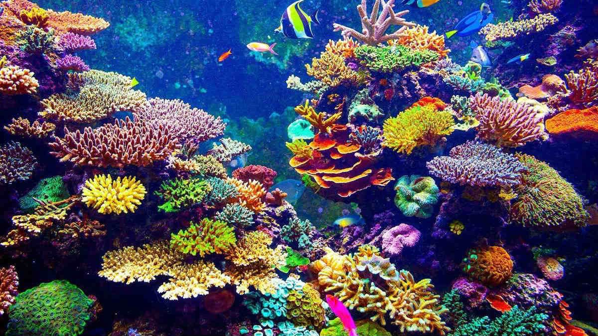 arrecife.jpg