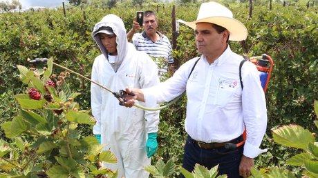 michoacán programa para sembrados de maíz.jpg