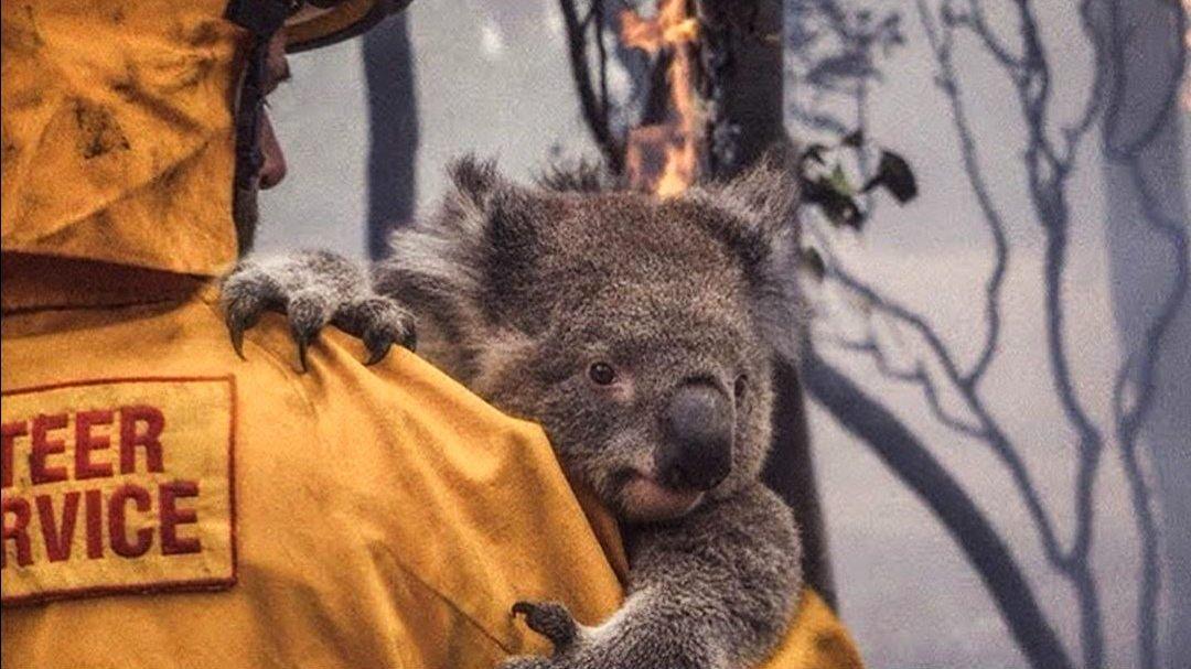 australia incendios.jpg
