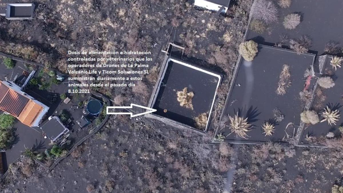 drones alimentan perro LaPalma.jpg