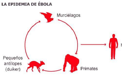 ébolaa.jpg
