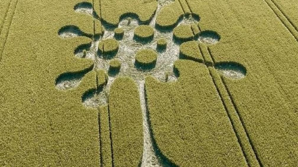 figura-covid-19-cultivo.jpg