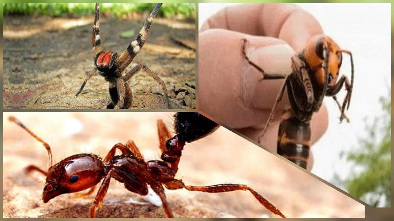 insectos peligrosos.jpg