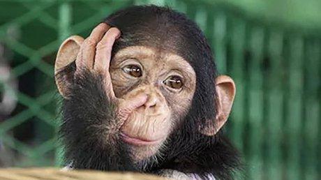 monos inmunidad.jpg