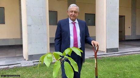 obrador planta arbol.jpg