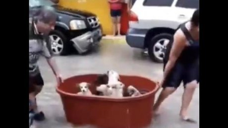 pareja salva a sus perros.jpg