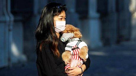 perro coronavirus.jpg