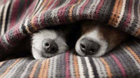 perros detectar covid-19.jpg