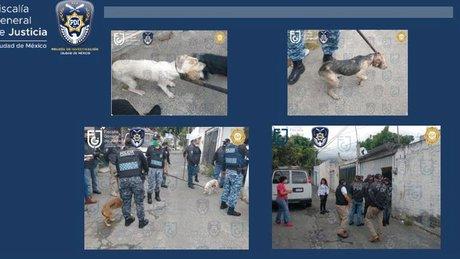 perros rescatados.jpg