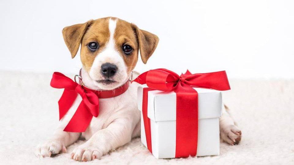 perros san valentin.jpg