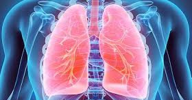 pulmones1.jpg