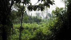 selva1.jpg