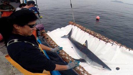 tiburones pelágicos.jpg