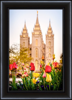 Salt Lake Temple Tulips - Framed