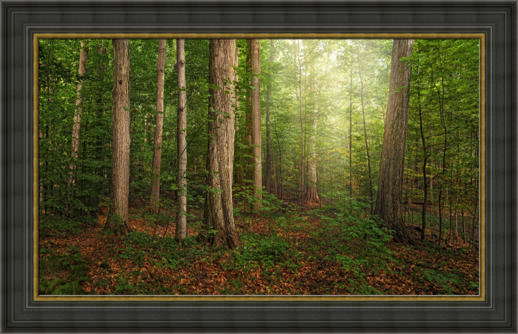 The Sacred Grove - Framed - D-AFA-TSG