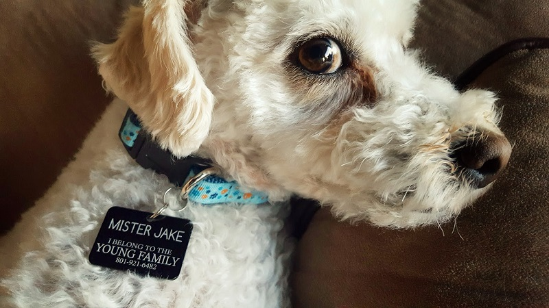 Personalized Missionary Pet Tag - LDP-PTG1560234