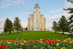 Manti Temple - Tulips And Grass