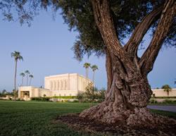 Mesa Temple - Tree