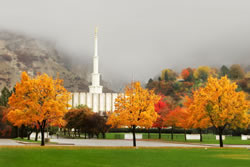 Provo Temple - Autumn Trees