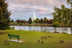 Idaho Falls Temple - River Bench