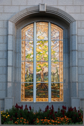 San Antonio - Tree of Life Window