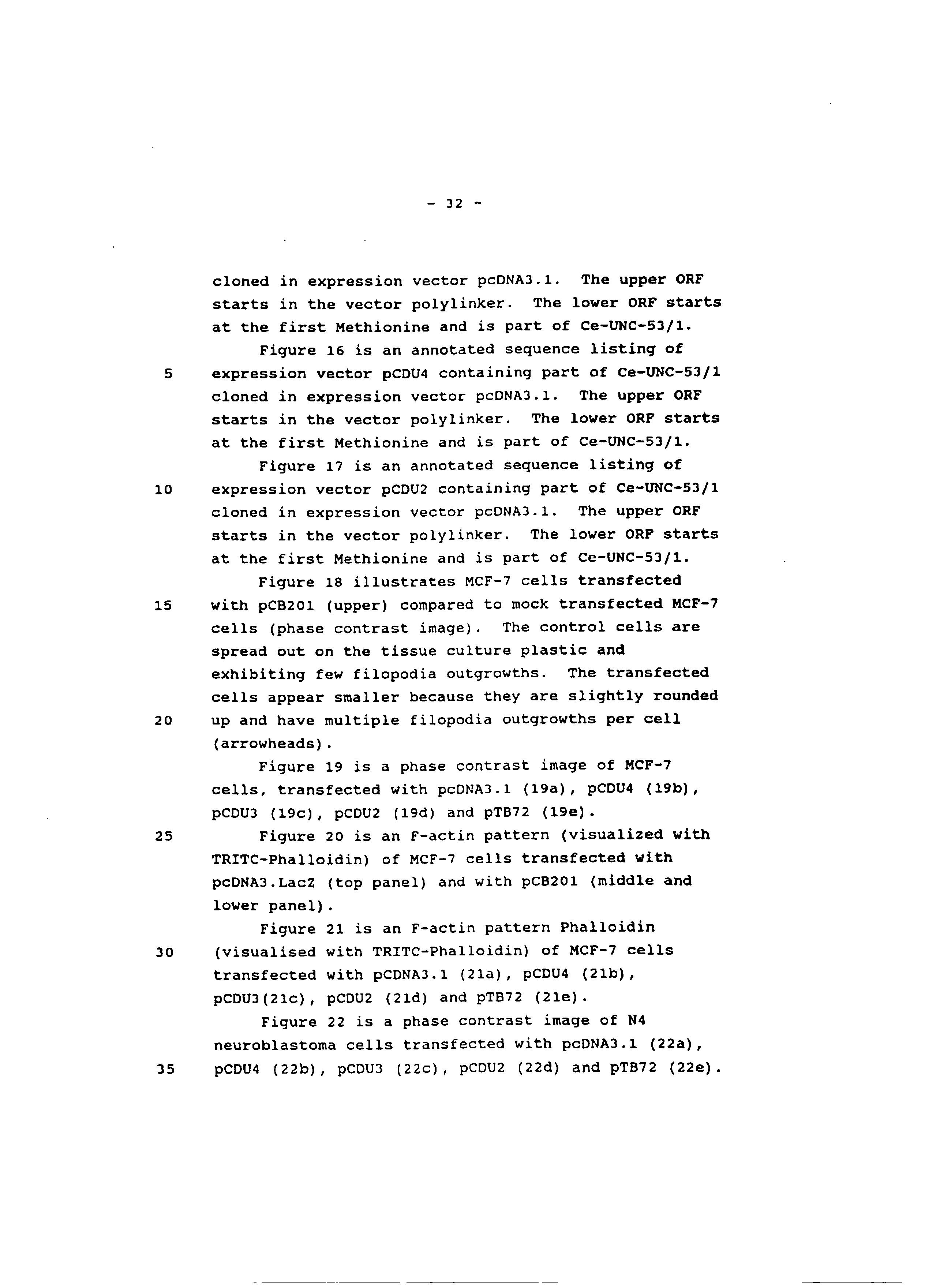 AU 780316 B2 - Vertebrate Homologues Of Unc-53 Protein Of C