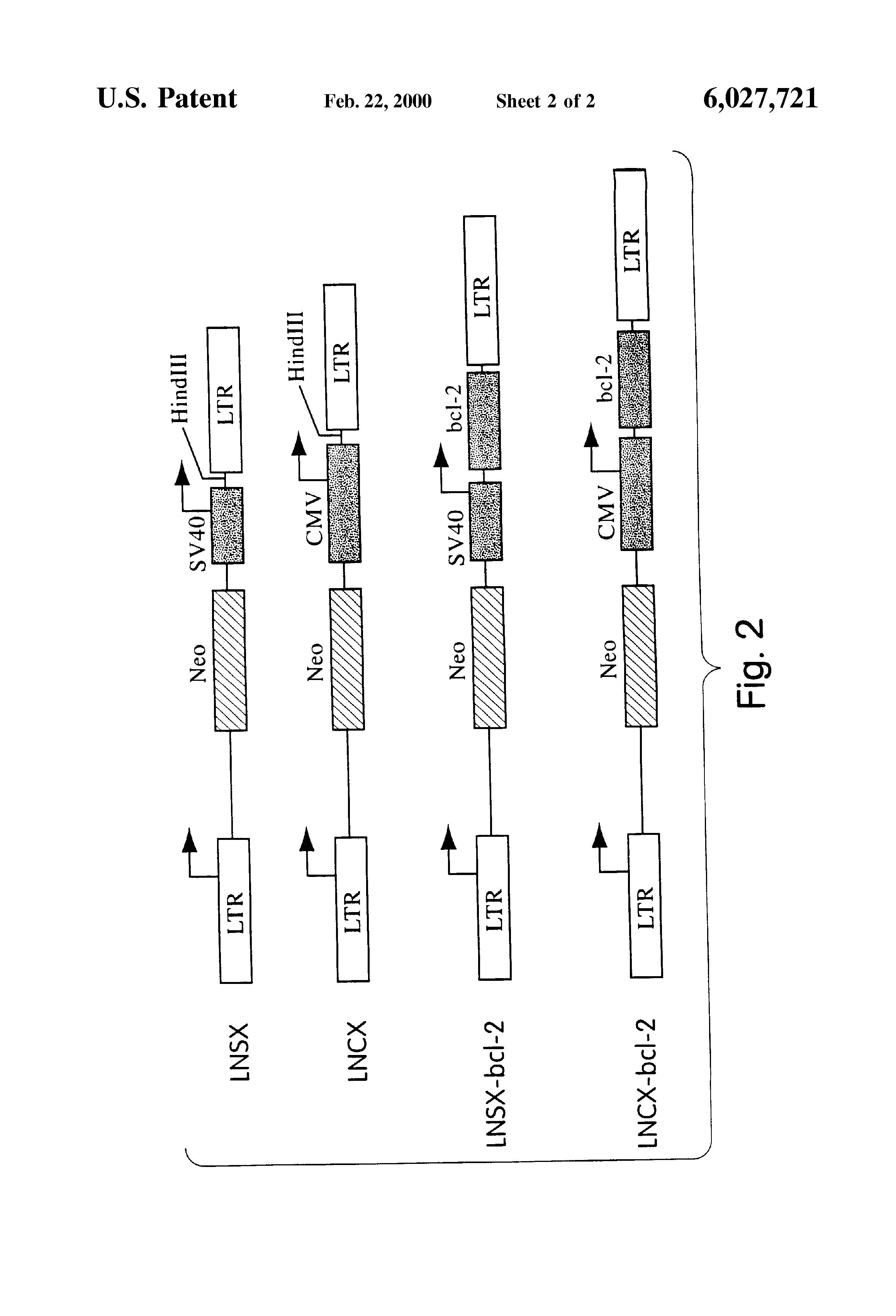 US 6027721 A - Device And Method For Encapsulated Gene Therapy - The