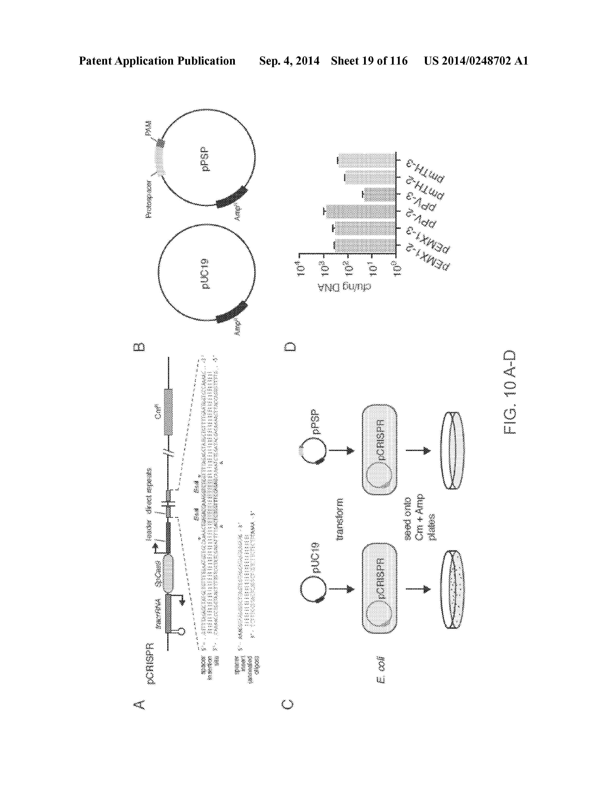 US 2014/0248702 A1 - Crispr-cas Nickase Systems, Methods And