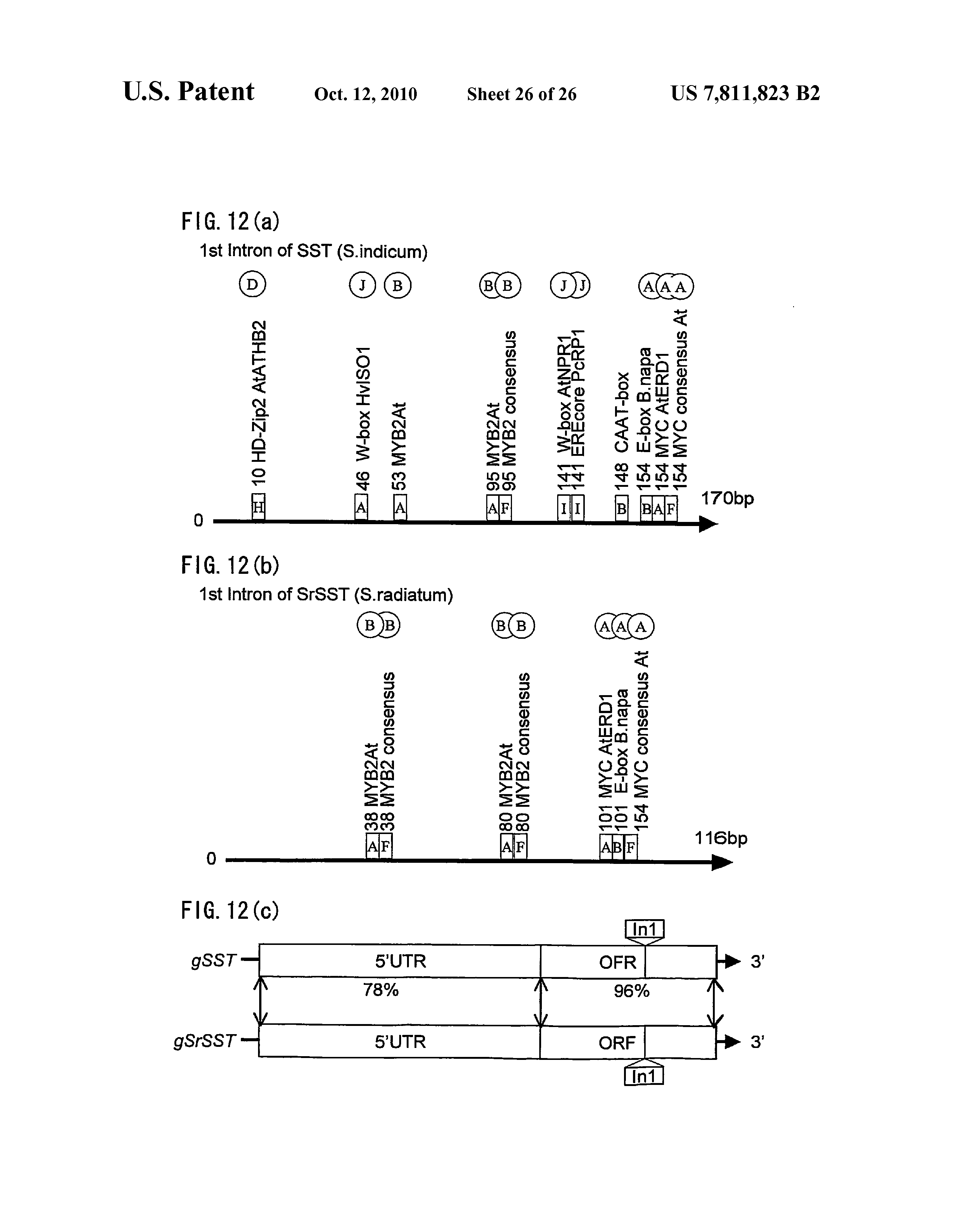US 7811823 B2 - Gene Encoding An Enzyme For Catalyzing
