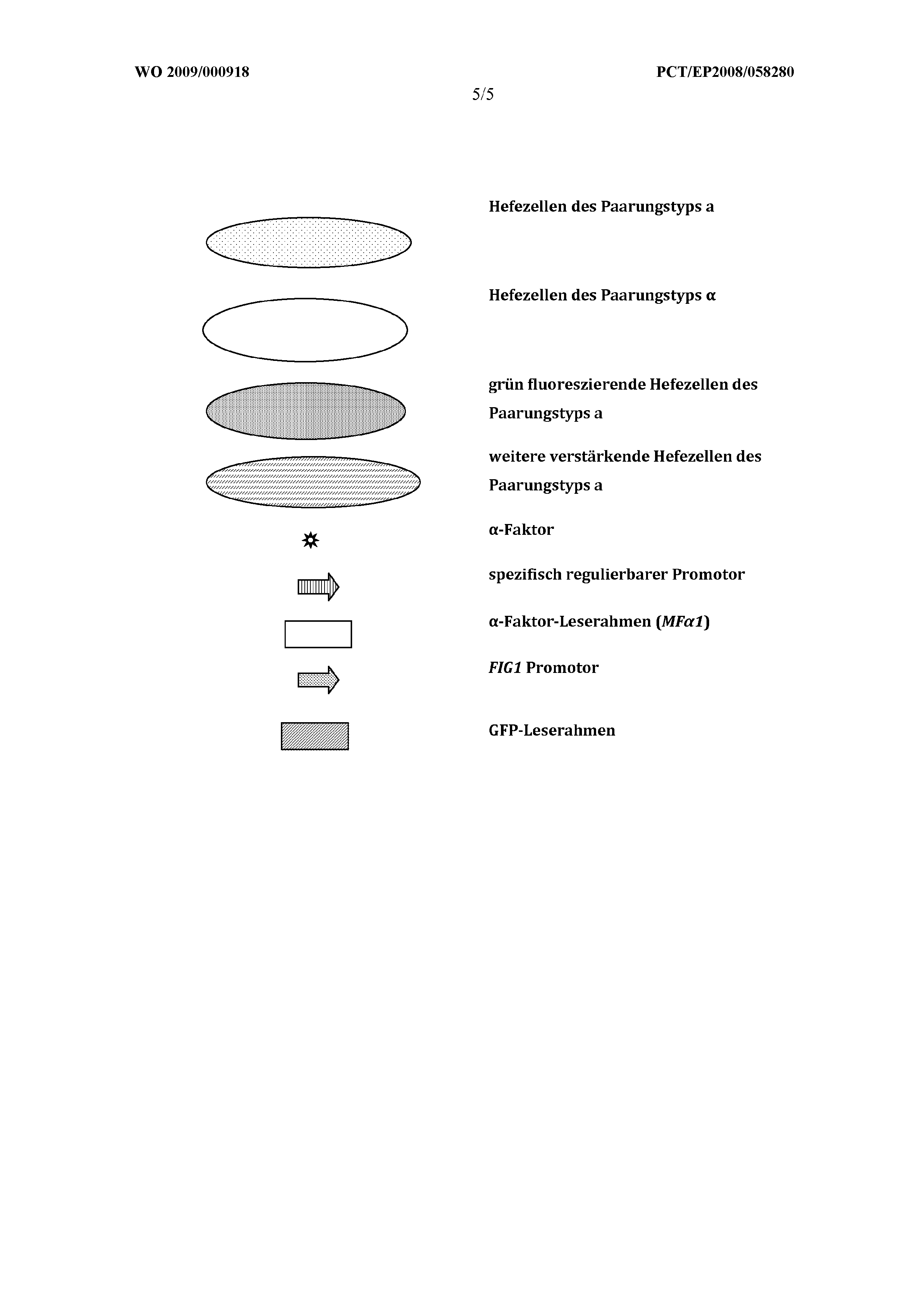 WO 2009/000918 A1 - Device And A Method For The Detection And ...