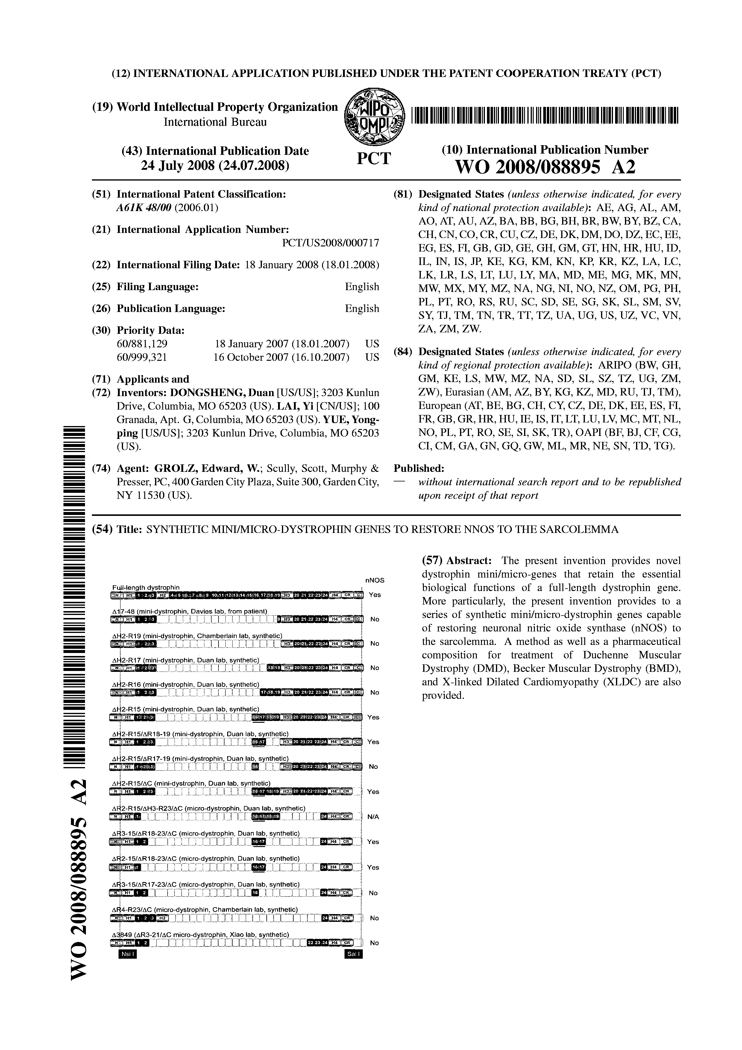 WO 2008/088895 A2 - Synthetic Mini/micro-dystrophin Genes To
