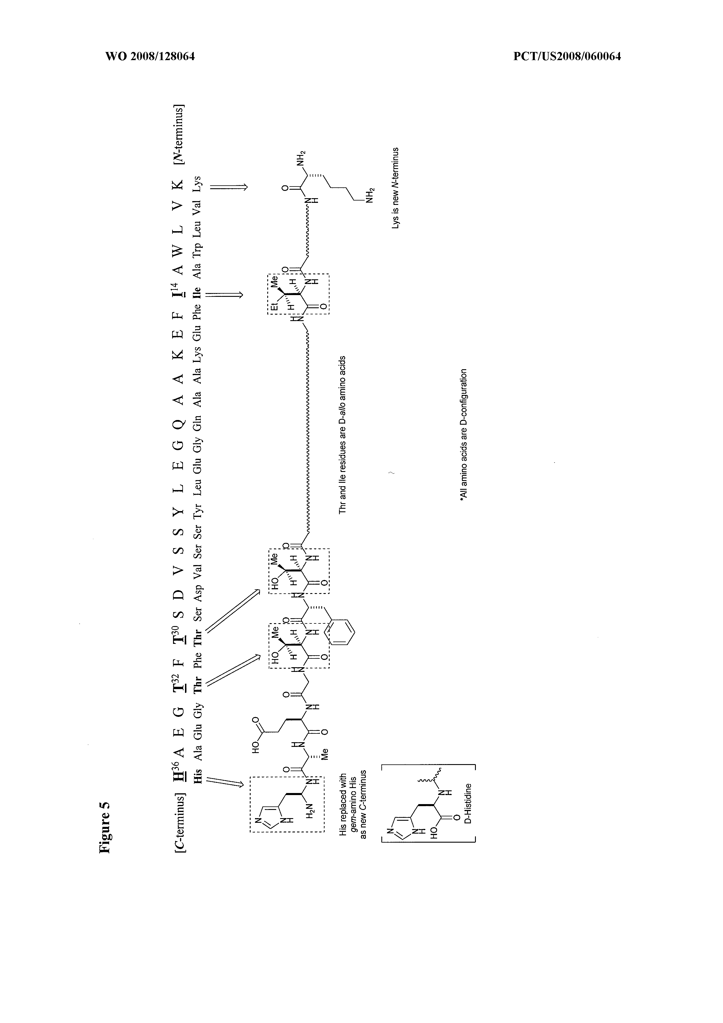 WO 2008/128064 A2 - Truncated Analogs Of Peptide And Polypeptide