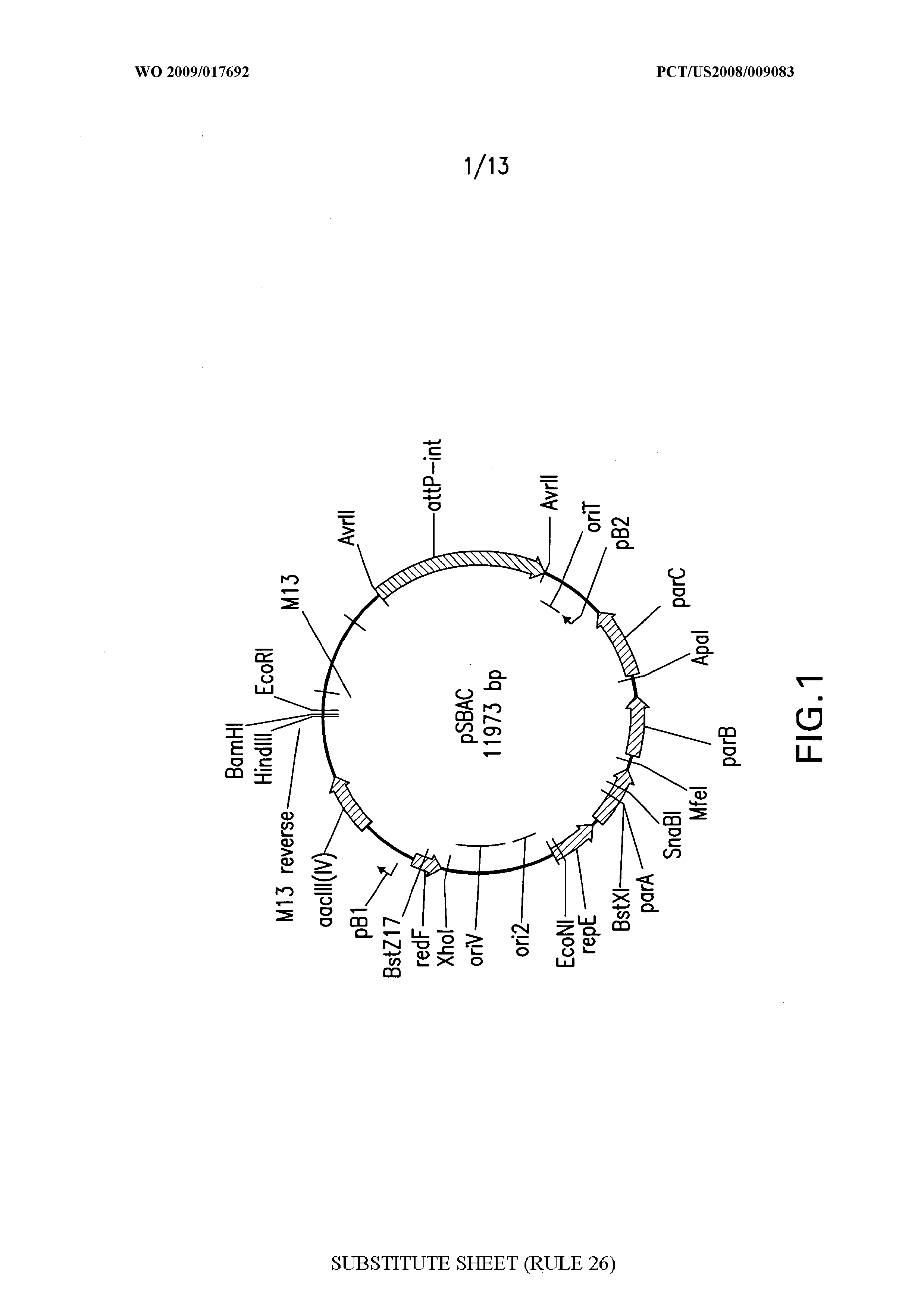 WO 2009/017692 A2 - Vectors And Methods For Cloning Gene