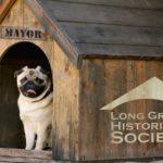 Long Grove Dog Mayor Election – 2021
