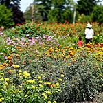 CSA Flowers (2).jpg