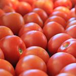 csa tomatoes 2.jpg