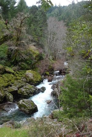 Mattole @ Noonin Creek 300x445.jpg