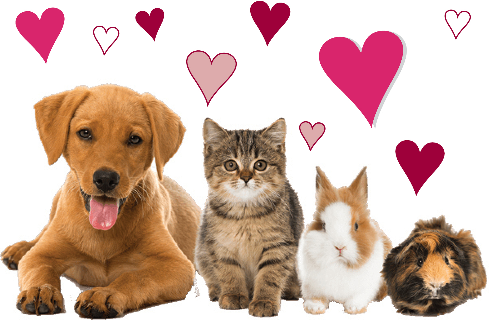 Sponsor an animal hearts_website size.jpg