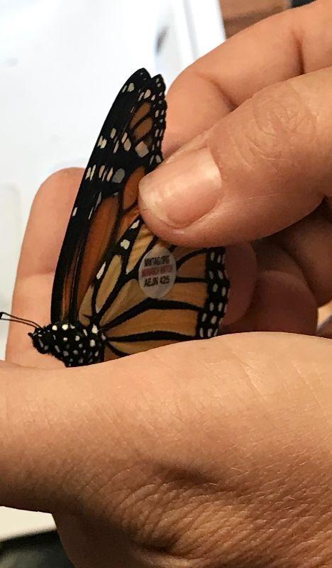 butterflyadopt.jpg