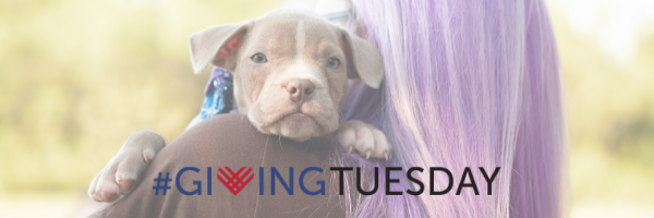 Giving Tuesday Email Header 1.png