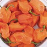 Pepper_Hot_Habanero.png