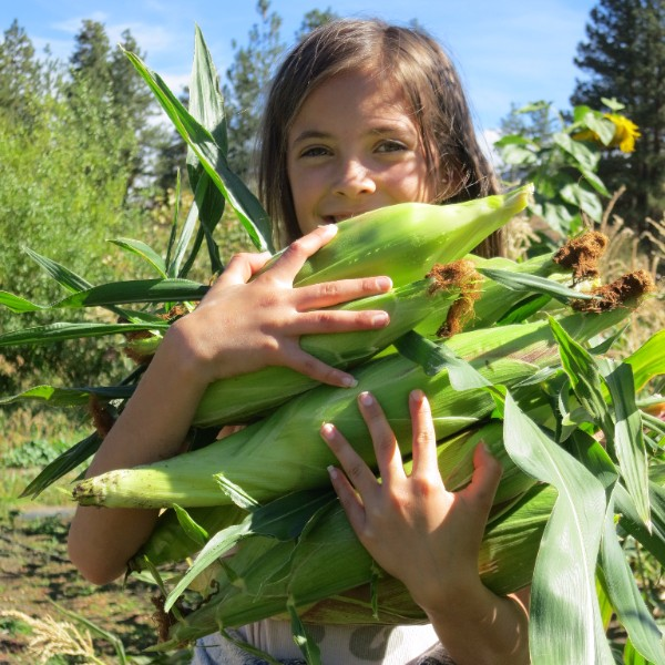 square corn.jpg