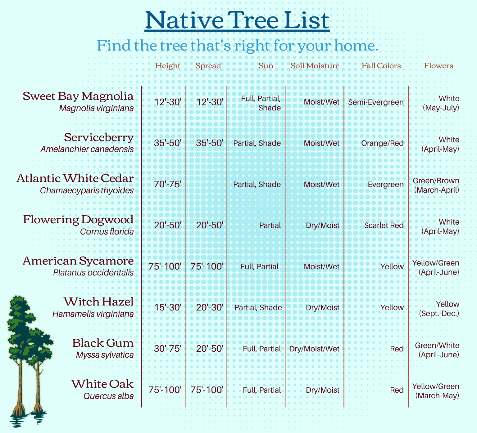 Updatd Tree Delivery List.png