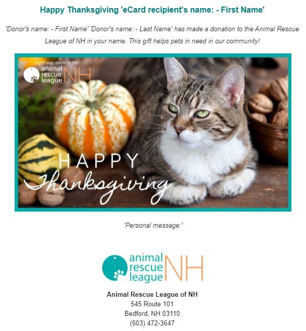 eCard preview Thanksgiving-cat.JPG