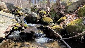 Barrett Preserve brook.jpg