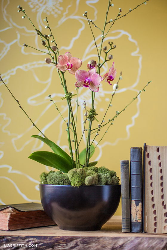 Orchid Plant Styling
